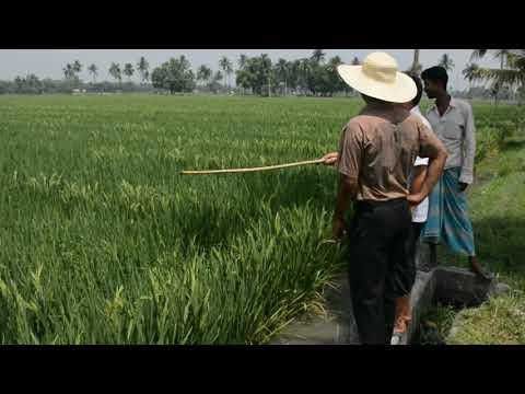 SL AGRITECH TO PUT UP HYBRID RICE MODEL IN MARAWI BIZWATCH