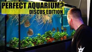 THE PERFECT AQUARIUM - Discus fish tank edition - The king of DIY