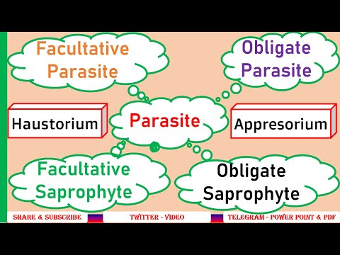 Mik a leghatékonyabb gyógyszerek a paraziták ellen