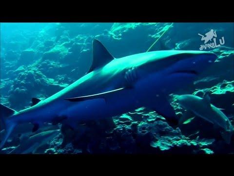 Yap - Vertigo - Shark Feed, Vertigo,Yap,Mikronesien