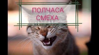 РЖАКА над котами на ПОЛЧАСА! Смотреть ДО КОНЦА)) Топ подборка смешных КОТИКОВ!