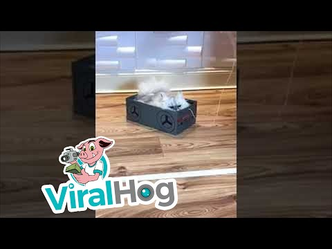 Кошка катается в коробке