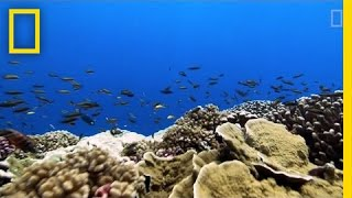 """Rising Ocean Temperatures are """"Cooking"""" Coral Reefs   National Geographic"""