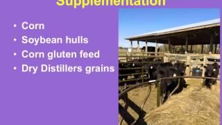 Winter Hay Feeding and Supplementation