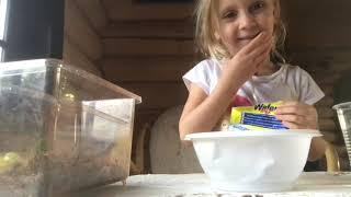 Алисины игрульки. Как играть с улиткой ахатином