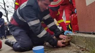 Пожарный спасает жизнь собаке