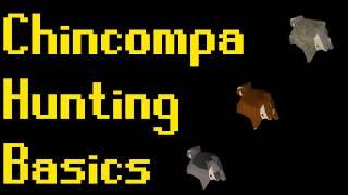 Basic Chinchompa Hunting Guide (OSRS)