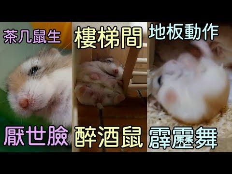 倉鼠耍費の日常 療癒系列