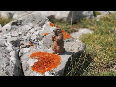 Schleich - Animales en Asturias Paraiso Natural
