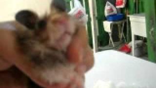 Hamster After Bath
