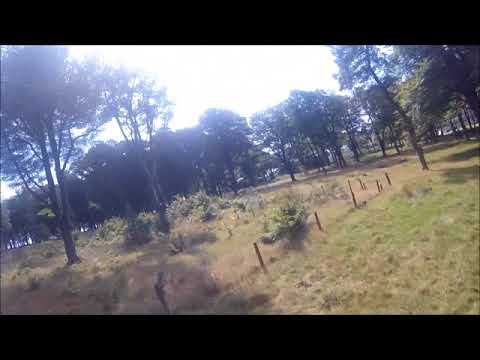 wingin-it-fpv-wing-in-the-woods