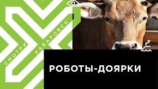 Роботы будут доить коров в Хабаровском крае