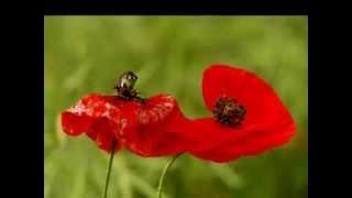 Bożena Kraczkowska Motylek (a)polityczny