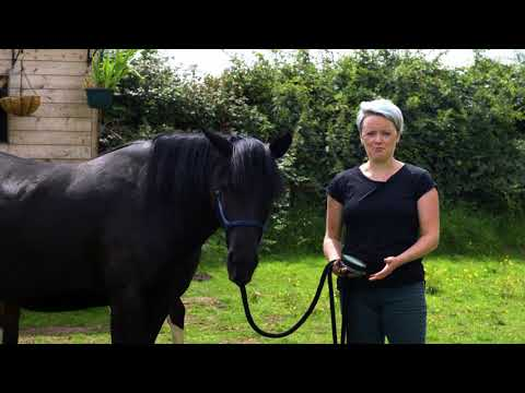 Equine and Animal Assisted Psychotherapy and Depression