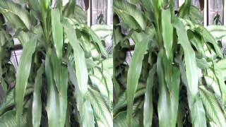 3D  Leaves by HTC