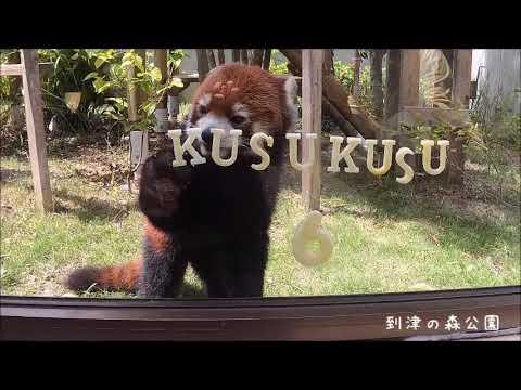 笑笑(クスクス)6才お誕生日★到津の森公園