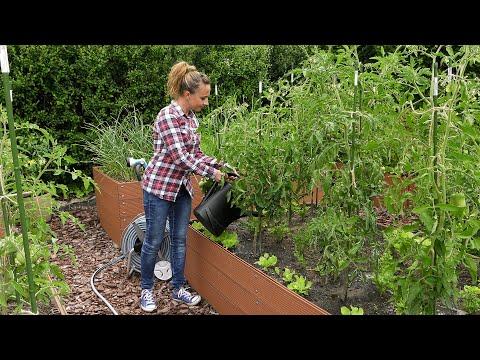 , title : 'Ogród warzywny - suszenie ziół, lipcowe zbiory i mączlik szklarniowy'