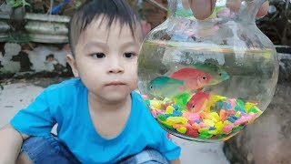 Trò Chơi Bé Pin Cá Koi Con ❤ ChiChi ToysReview TV ❤ Đồ Chơi Trẻ Em Baby Doli Fun Song