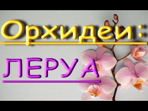 "Орхидеи в ЛЕРУА:привезли ""СТАНДАРТЫ"",06.06.20,Самара,ТЦ ""Космопорт"""
