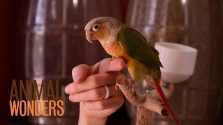 Bird Finger Perch
