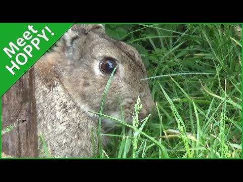 """meet-hoppy""-funnyfarm2018-se02e02-trailer-2"