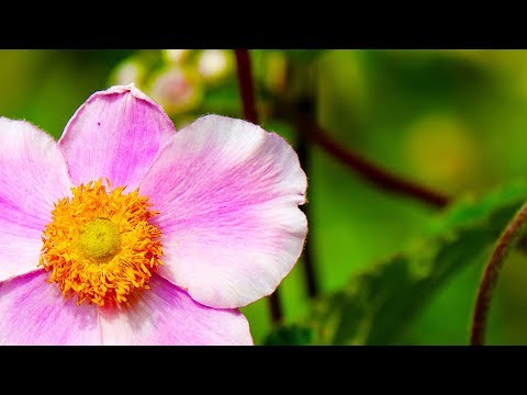 Morning Relaxing Music - Study Music, Positive Music, Piano Music (Victoria)