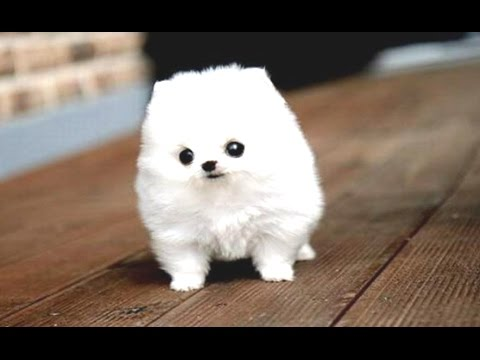 Cute Puppy Videos Compilation