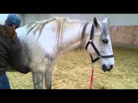 Die Behandlung des Rückens stanowoj vom Luftzug