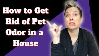 How to Get Rid of Pet Odor in a House