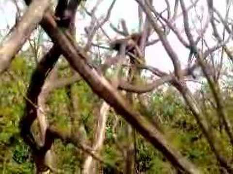 Red pandas 3
