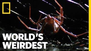 World's Weirdest - Deadly Mating