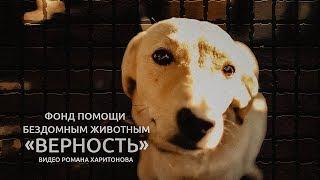 Фонд помощи бездомным животным «Верность».  Видео Романа Харитонова