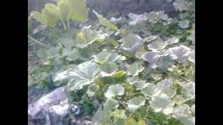 preview picture of video 'La hausse du prix des légumes inquiète les ménagères.'
