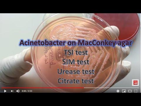 La medicina più efficace per adenoma prostatico
