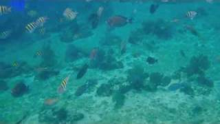preview picture of video 'Cozumel Snorkeling'