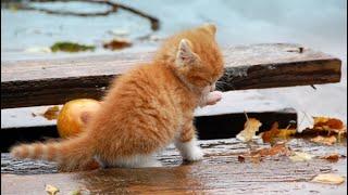 Мокрый маленький комочек путался под ногами у прохожих в надежде на спасение