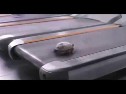 Ked to dá aj korytnačka
