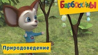 Барбоскины - Природоведение. Сборник мультиков