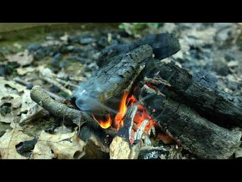 Plenty of firewood can be found around the site. Just be careful with the dry leaves, they are EVERYWHERE and accidently staring a forest fire would be easy...