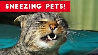 Try Not To Laugh At These Sneezing Pets & Animals of 2017 Compilation | Funny Pet Videos