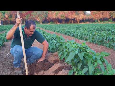Como determinar el porcentaje de humedad de un suelo