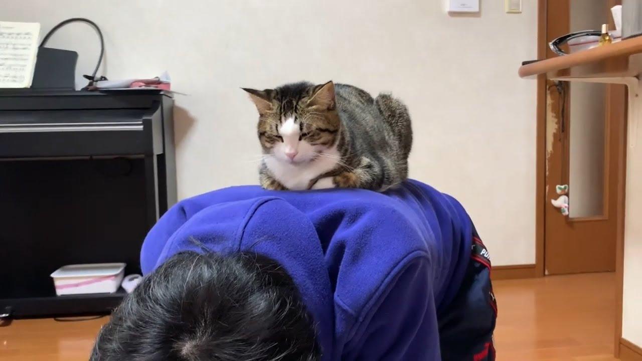 一瞬のスキを見逃さない猫