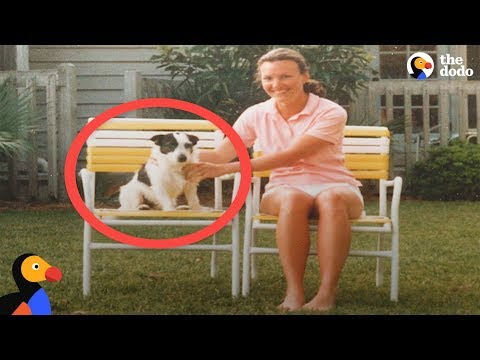 Ghost Dog Visits Family As A Spirit | The Dodo