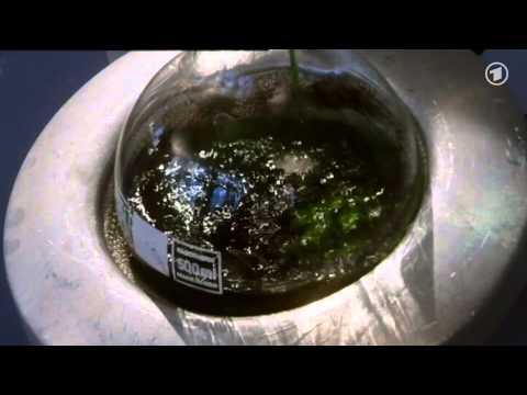Die Sendung mit der Maus: Erdöl aus Algen
