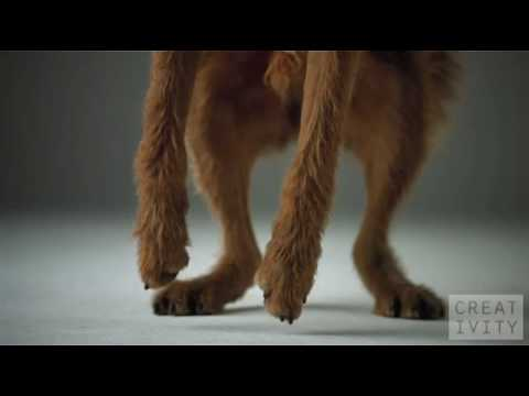 dogs in ads