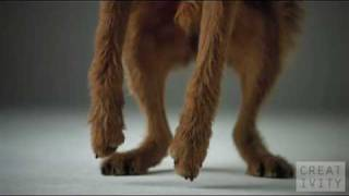 Thank God It's Fido (TGIF) - Best Dog Commercials!