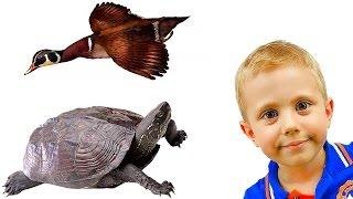 Видео для детей про черепах, уток и других речных обитателей. Ребёнок и природа. Приключение Даника