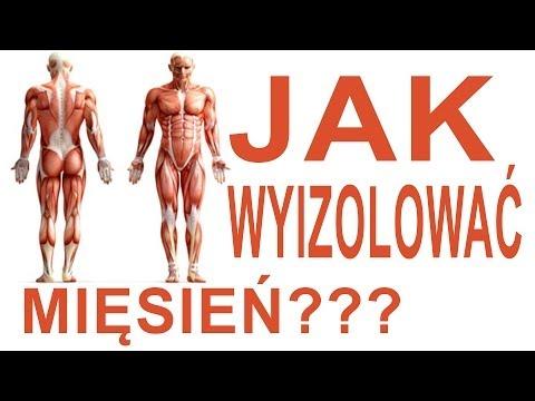 Struktura mięśni człowieka