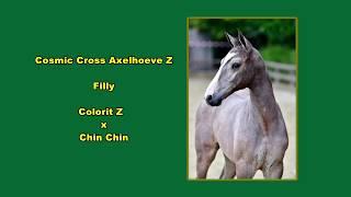 Cosmic Cross Axelhoeve Z