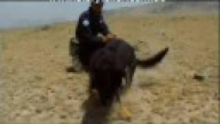 Part 1 Dogs of Peace | Storyteller Media